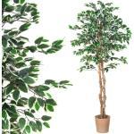 Műnövény PLANTASIA® Fikusz 190 cm