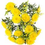Művirág - krizantém, sárga